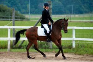 albino häst till salu